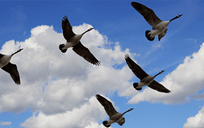 Getting Ready for an Office 365 Mail & File Migration